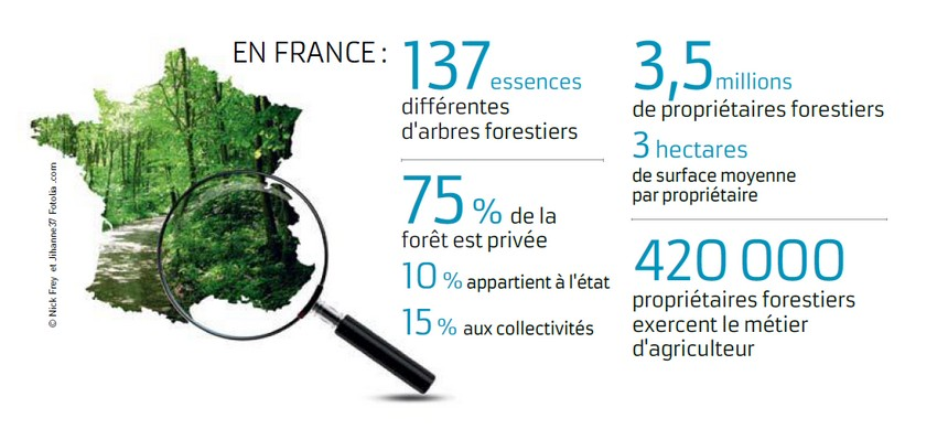 http://www.chambres-agriculture.fr/fileadmin/user_upload/National/002_inst-site-chambres/pages/agri_pol/infographie_foret_france_1.jpg
